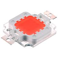 10W Festoon LED növény izzók 10 Integrált LED 500 lm Lila DC 12 V 1 db.