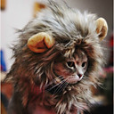 זול אביזרים ובגדים לכלבים-חתול / כלב בנדנות וכובעים בגדים לכלבים אנימציה טרילן / חומר מעורב תחפושות עבור חיות מחמד יוניסקס קוספליי