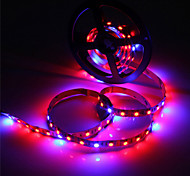 abordables -150-250 lm Growing Strip Lights 300 leds SMD 5050 Impermeable Azul Rojo DC 12V