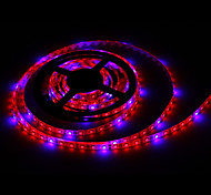LED Grow Lights 300 SMD 5050 lm Red Blue K DC 12 V