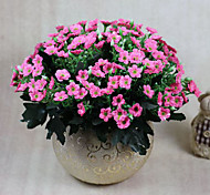 cheap -1 Branch Polyester Plastic Others Tabletop Flower Artificial Flowers