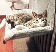 Недорогие -Кошка Кровати Животные Коврики и подушки Однотонный Сохраняет тепло Влажная чистка На каждый день Серый Желтый Для домашних животных