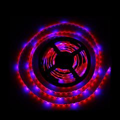10W E14 Luz de LED para Estufas Tubo 300 SMD 5050 1300LM lm Azul Vermelho K Impermeável Decorativa DC 12 V