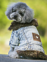 Dog Coat Denim Jacket/Jeans Jacket Dog Clothes Cowboy Keep Warm Fashion Jeans Black Blue Costume For Pets