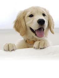 Artykuły dla psów